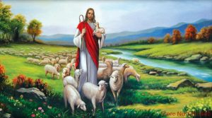 Jesus sheep
